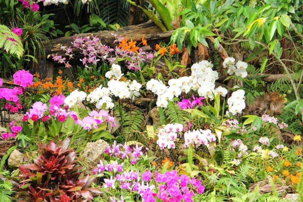 『ビオスの丘』色々な植物