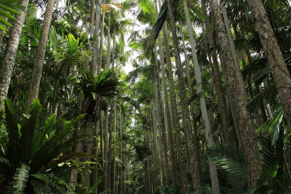 東南植物楽園の目玉「ユスラヤシ並木」