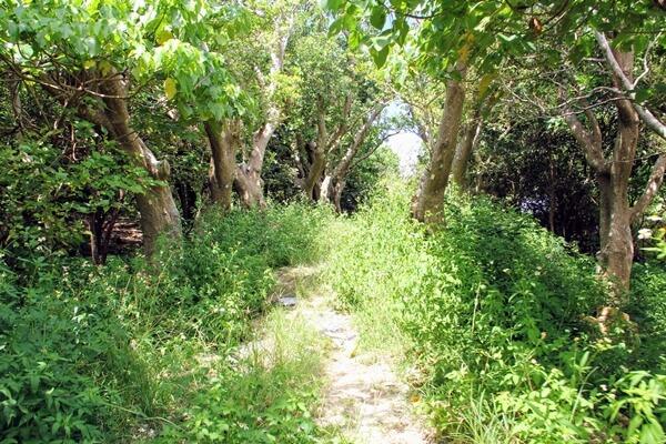 『玉城城跡』城門へ続く階段までの道